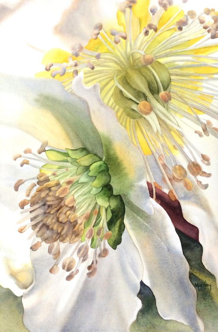 1434 best images about art watercolor flowers on pinterest for Watercolor painting flowers