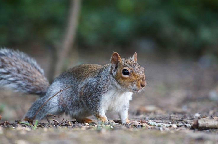 Dnešní reportáž není pro slabé povahy. Dozvíte se v ní věci, které byste do roztomilé veverky nikdy neřekli. Připraveni? Čtěte teď!