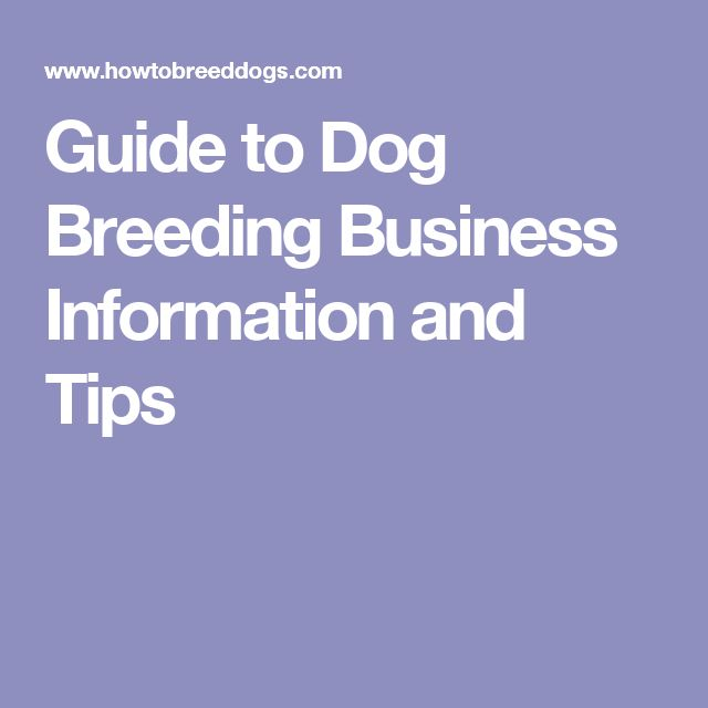 Guide to Dog Breeding Business Information and Tips