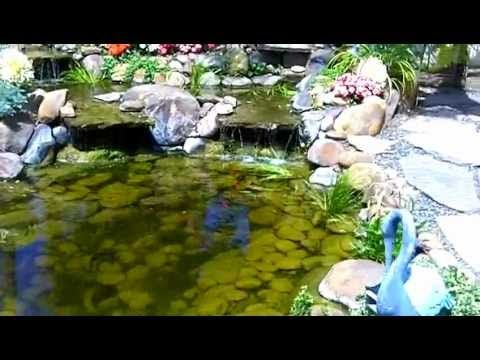 353 best images about amazing water features on pinterest for Koi pond zoning
