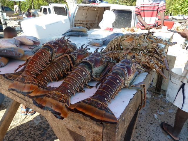 Bahamian Lobster Holy Shit They Are Huge Yum
