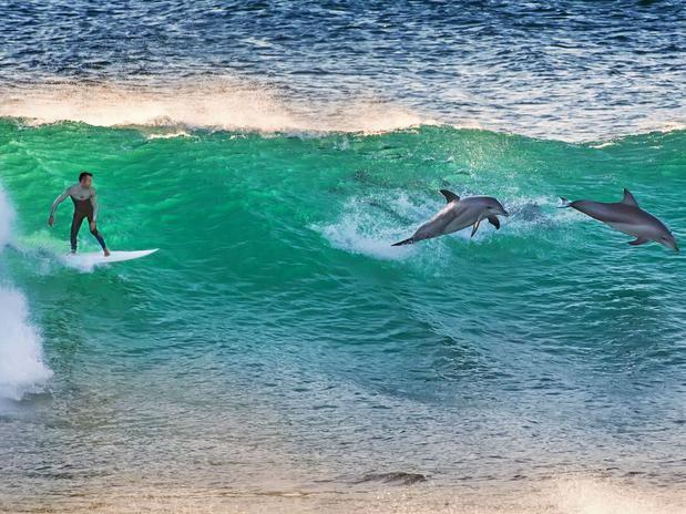 Fotógrafo registra surfista pegar onda com golfinhos - Terra Brasil