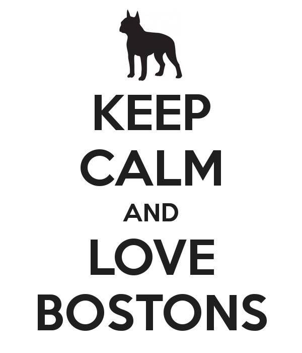 Boston Terriers = love. We are getting a boston terrier BRANDON!!!