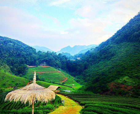 Bioherby Organic Mountain Gynostemma. 100% Highest quality & Highest Purity! https://www.bioherby.com/organic-jiaogulan-tea-extract-gynostemma