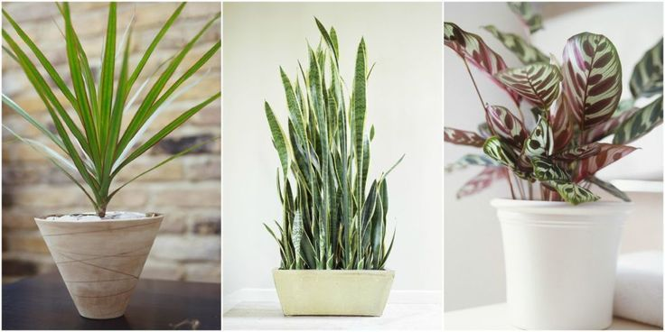 1000 ideas about low light houseplants on pinterest flowering house plants indoor flowering - Low light flowering house plants ...
