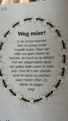 Weg met mieren, zou het echt werken??