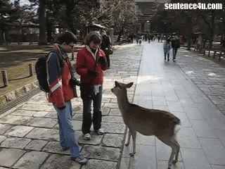 Nara Deer A gentleman deer in Nara, Japan.   A gentleman deer in Nara, Japan.