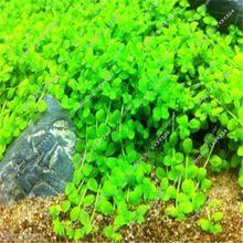 500 sztuk rzadkie nasiona rośliny akwariowe dziecko łzy na żywo micranthemum monte carlo nasion roślin wodnych ryby akwarium dekoracje tkanki(China (Mainland))