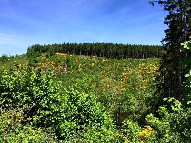 Forêt dans les Ardennes belges