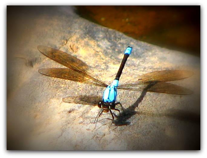 Scenic  tour of the tablelands with a friend and got some great shots of a dragonfly