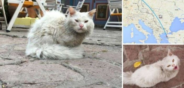 Iraqi Refugee Cat Got Lost in Greece and Reunited with Family in Norway