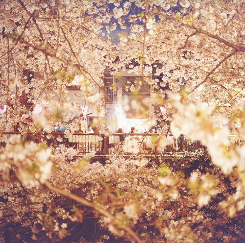 朝顔の咲く季節
