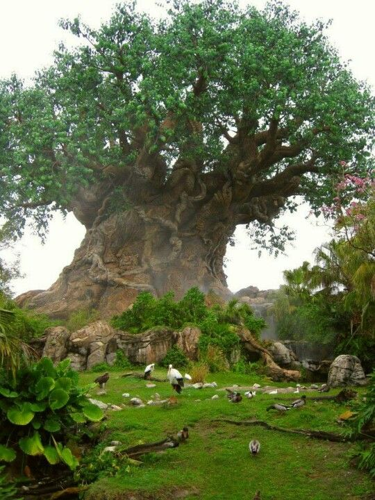Baobab Tree of Life  So gorgeous  I want to go here