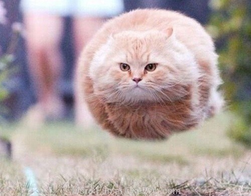 Just a Flying Cat