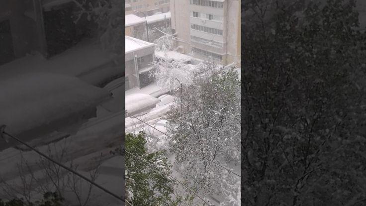 Снежный катаклизм в Кишиневе. Вид из моего окна.
