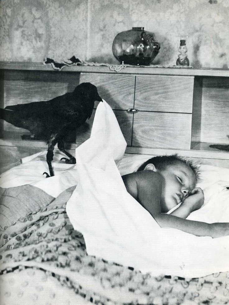 Date unknown A crow tucks a little boy into bed.