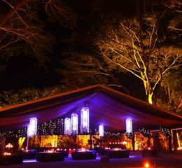 Dining Port Douglas,Rainforest Dining,Cairns,Palm Cove...Flames of the forest! Dine in the rainforest at night