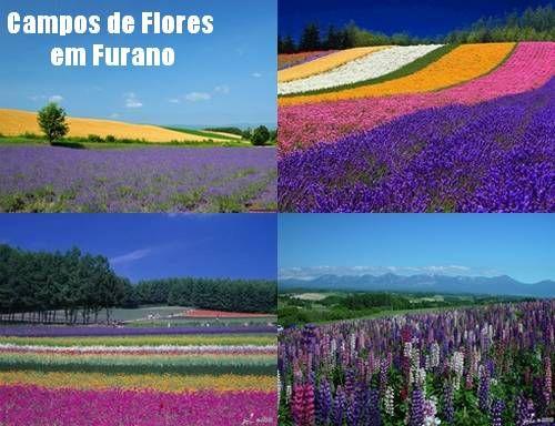 Virágok mezők Furano