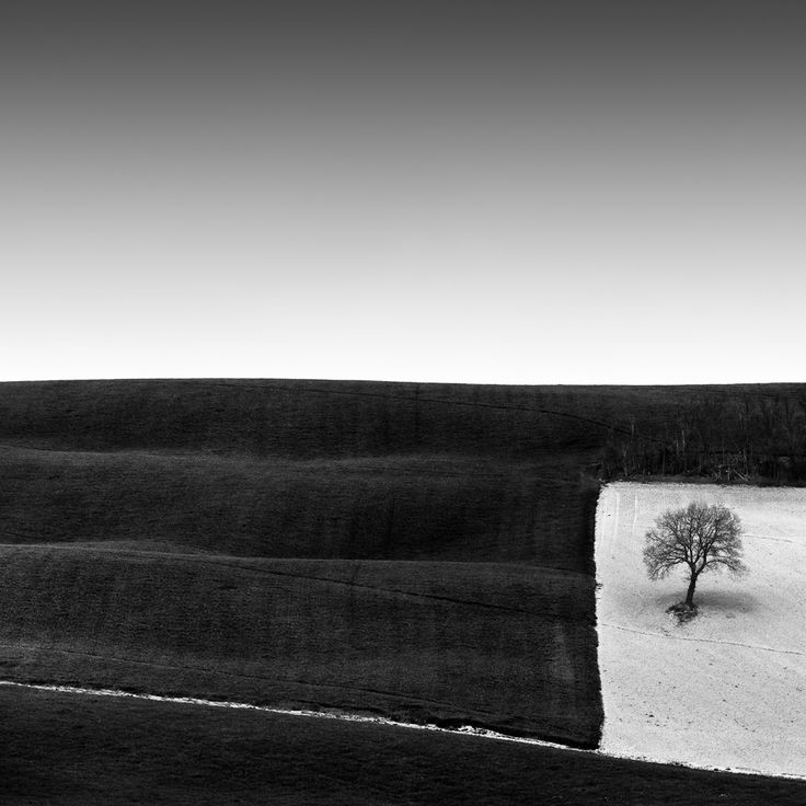 Tree in a Square: by Rosario Civello #Photography #Nature #Vegetal #Tree #forest
