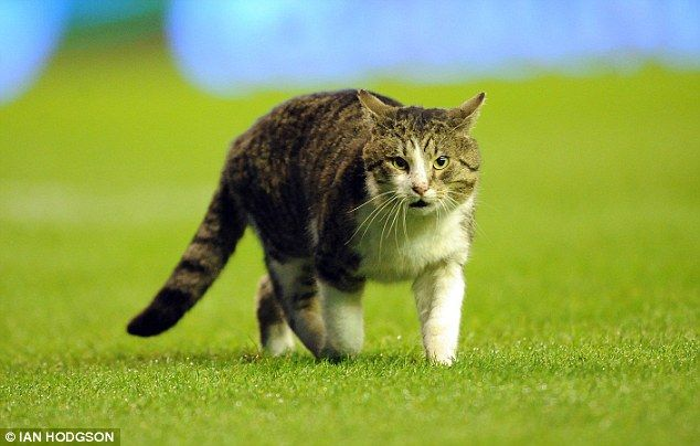 The famous Anfield Cat.