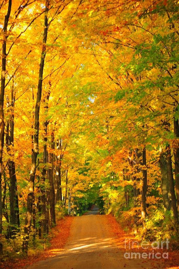 This path is inviting me to come for a walk and breath in the smells of autumn! Thank you Lord for the gift of autumn!