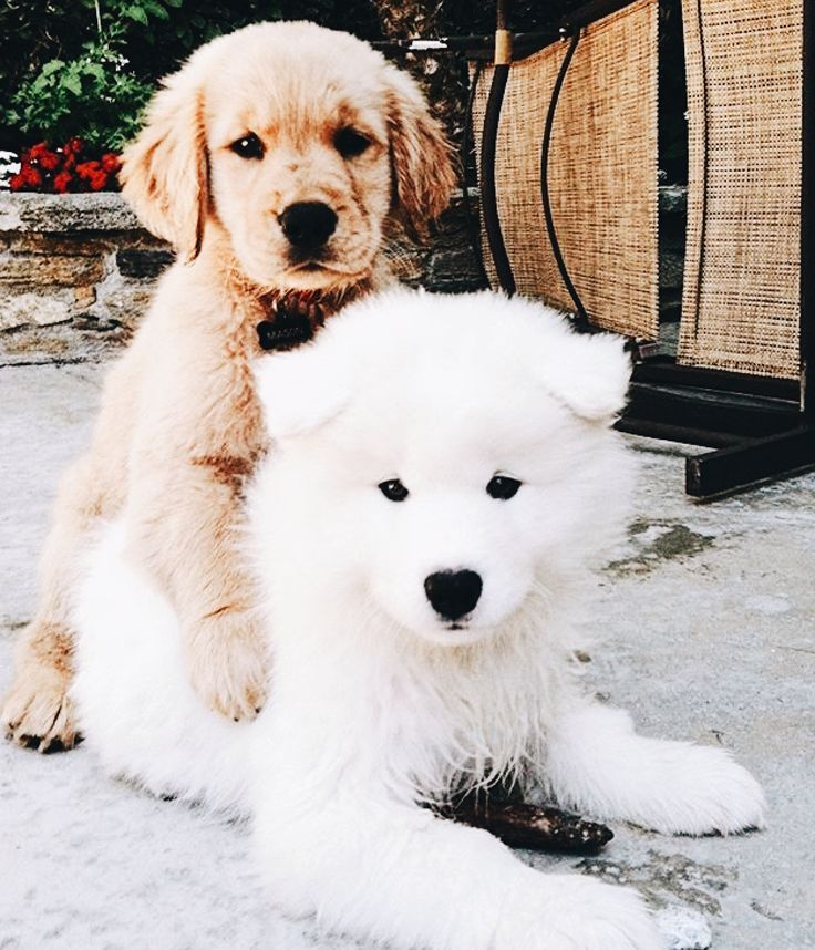 Pin By Pretty Fluffy On Fluffy Loves Cute Animals Cute Dogs And Puppies Cute Dogs
