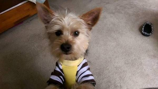 Contact Owner: Enter your contact details below and this information will be emailed directly to the pet's owner.  *Your information will be private and confidential. Spamming of any kind is strictly prohibited and will be reported.  First Name: Last Name: Phone Number: Confirm Phone:  Security Code:     Please enter the text above