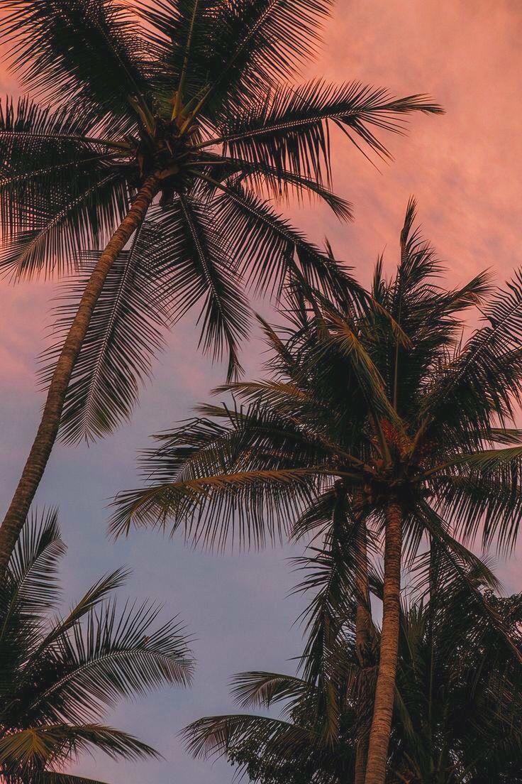 Tropical Paradise Tree Wallpaper Iphone Tumblr Wallpaper Palm Trees Wallpaper