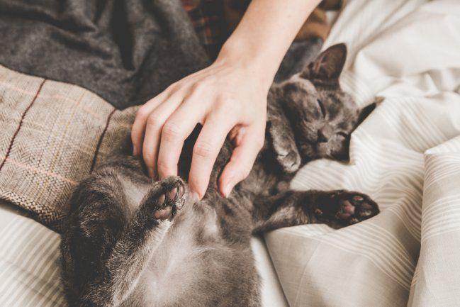 Celebramos el Día Internacional del Gato con estos adorables y divertidos gifs - IMujer
