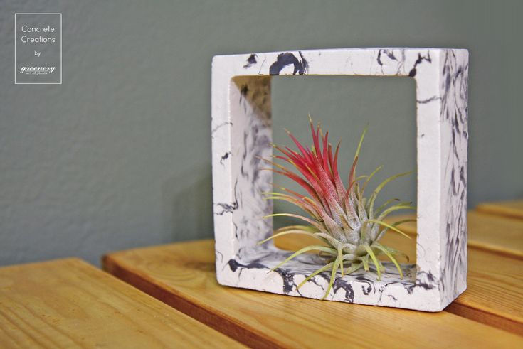 Concrete square with Tillandsia Ionantha Red #greenery #airplants #concrete #plants #greece