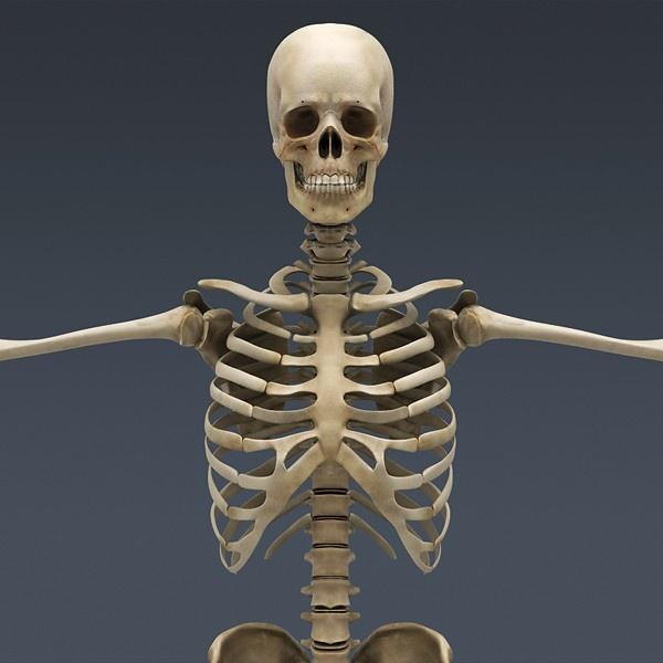 Human Skeleton Cinema 4D Rigged 3D model