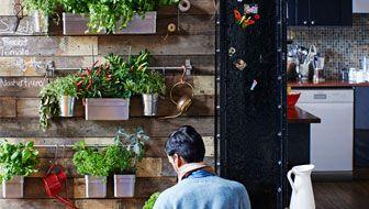 Skaffa en egen inomhusträdgård