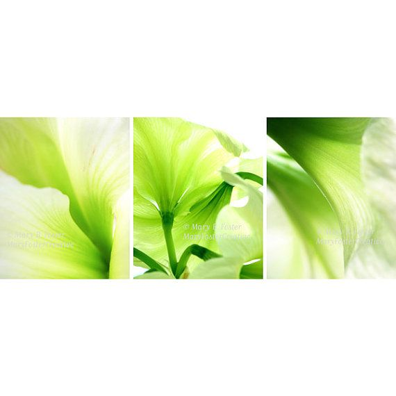 Abstract Green Amaryllis Flowers Photo Set by MaryFosterCreative, $63.75