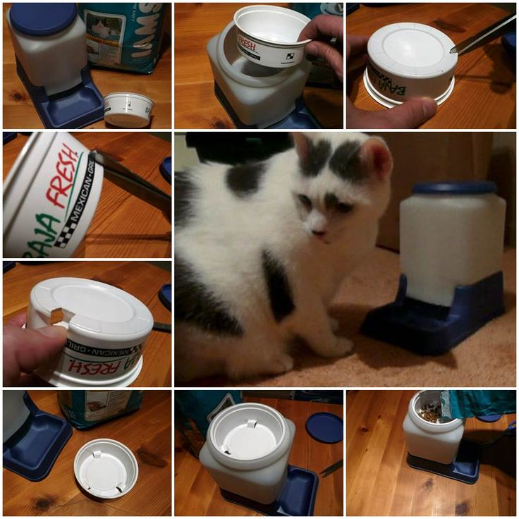 DIY Cat-Powered Automatic Cat Feeder