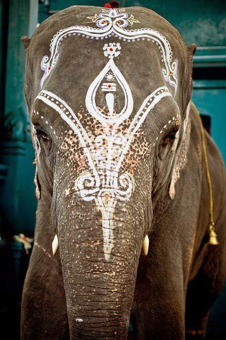 Gorgeous photo of an elephant in India. #NomadsSecrets