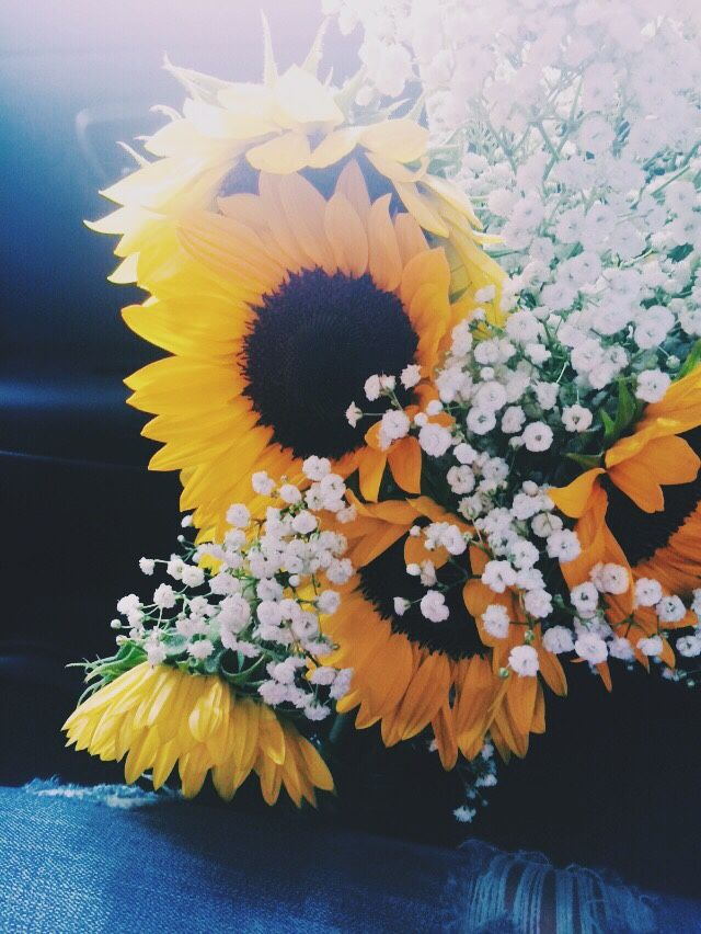 sunflowers with little white flowers