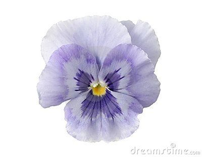 Design Elements: Light Blue Pansy Stock Image - Image: 92871