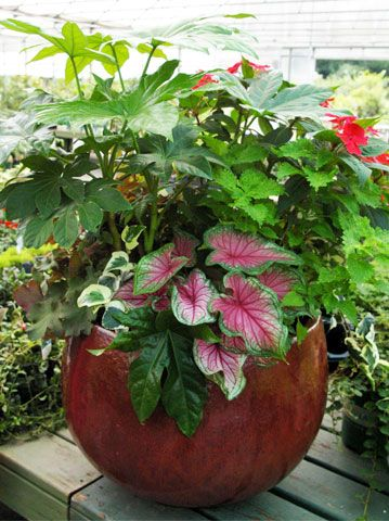 94 Best Images About Container Gardens On Pinterest