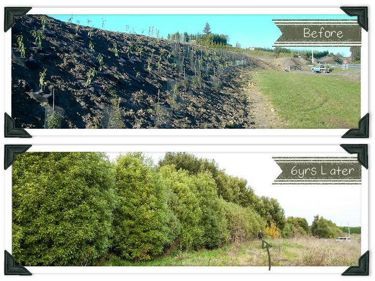 Learn how to plant trees and take a look at some great before and after photos for inspiration in this weeks blog from Country Trading Co.