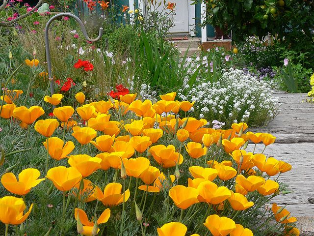 Best Beautiful Front Yard Landscaping Images On Pinterest - Urban front yard landscaping ideas