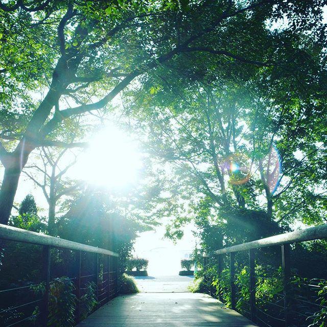 【biyoushiphoto】さんのInstagramをピンしています。 《#YOLO #f4f #follow4follow #follow #beautiful #instagood  #instaphoto #tokyocameraclub  #風景 #オシャレ #街並み #東京カメラ部#グリーン #森 #緑》
