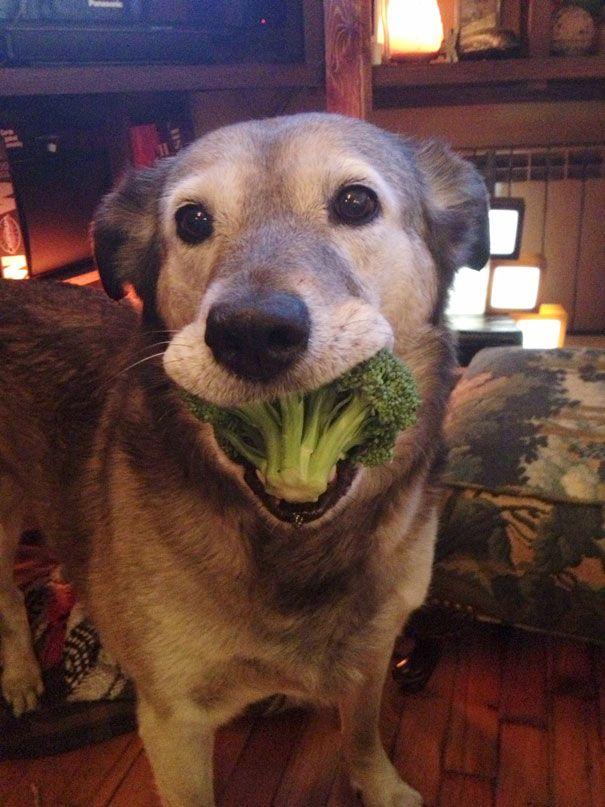 My Dog Looooooves Broccoli