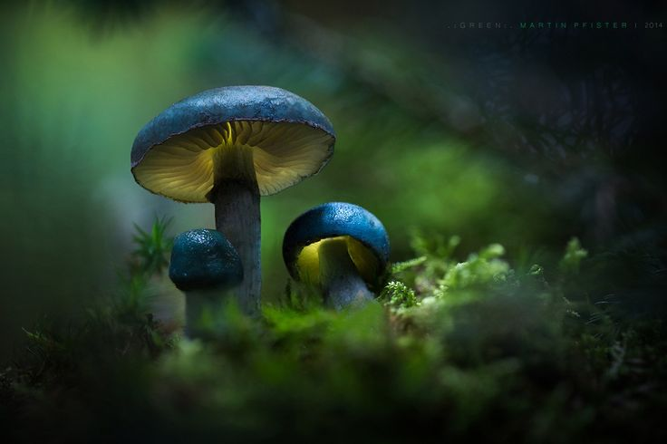 The colours of this mushrooms are no fake.  Very beautiful - but they are small,  so it was not easy to work with them...  ...hope you like the three! :)