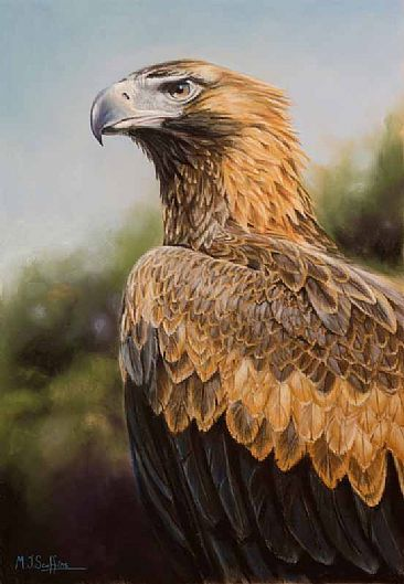 Wedge-tailed Eagle Bird Picture - http://www.petandanimals.com/wedge-tailed-eagle-bird-picture/