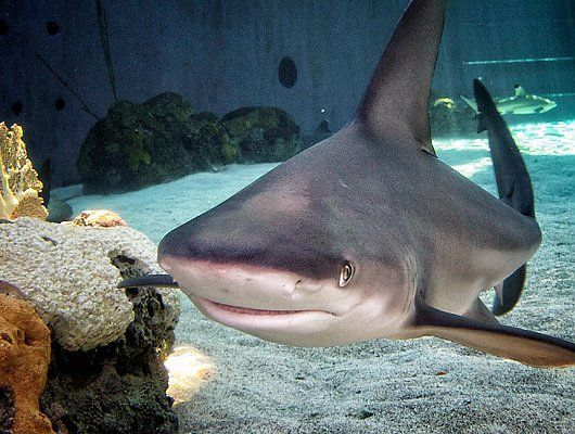 Best Aquarium Sharks Ideas On Pinterest Freshwater Aquarium - 10 awesome aquariums where you can spend the night with sharks
