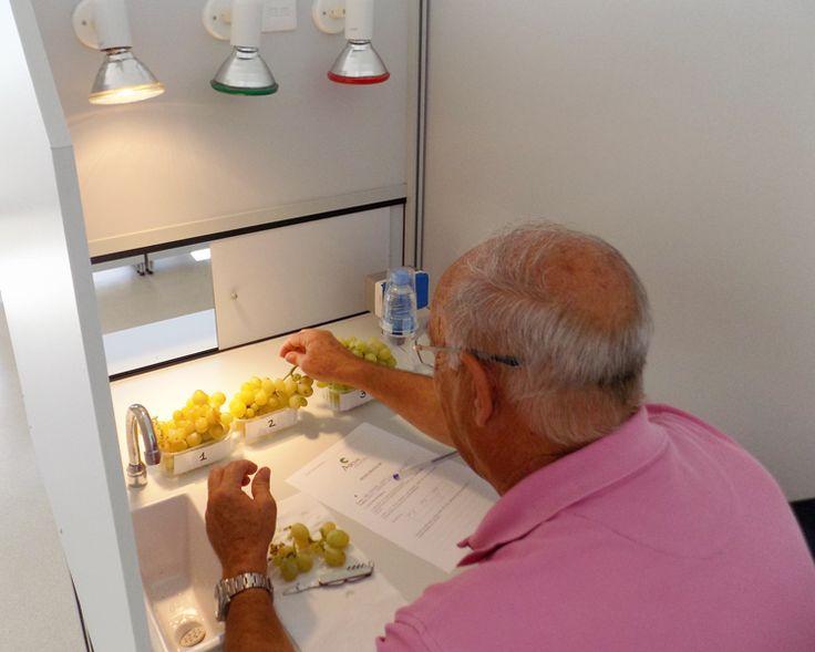 Análisis Sensorial con consumidores en uva