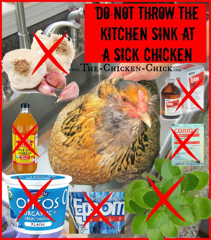 If the bird is eating and drinking normally, do not drastically change their diet by offering foods or supplements they do not ordinarily take- doing so can complicate the assessment and identification of the problem and make an unwell chicken feel even worse.