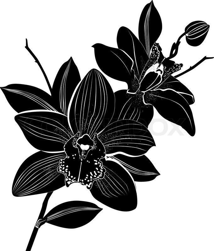 Cattleya Vector Cattleya Vector Cattleya Vector Cattleya Orchid Vector In 2020 Orchid Tattoo Orchid Drawing Lotus Flower Art