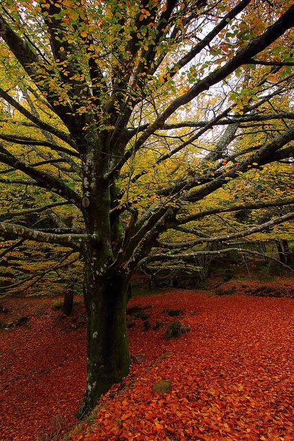 Fall in Monte Aloia, Galicia, Spain
