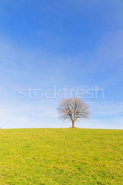 Single tree in winter sun stock photo (c) ivonnewierink (#6921692)   Stockfresh